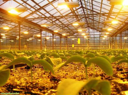 освещение растений в промышленной теплице