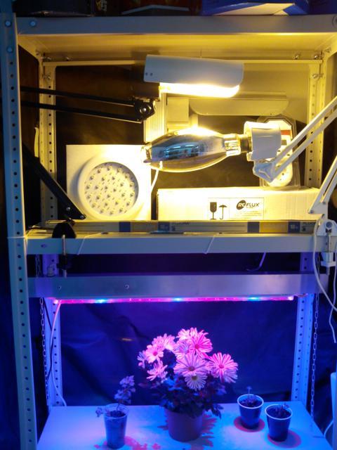 фитостеллаж для растений