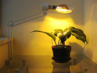 фитосветильник для растений с лампой ДНАТ (светильник Бета-Ф)
