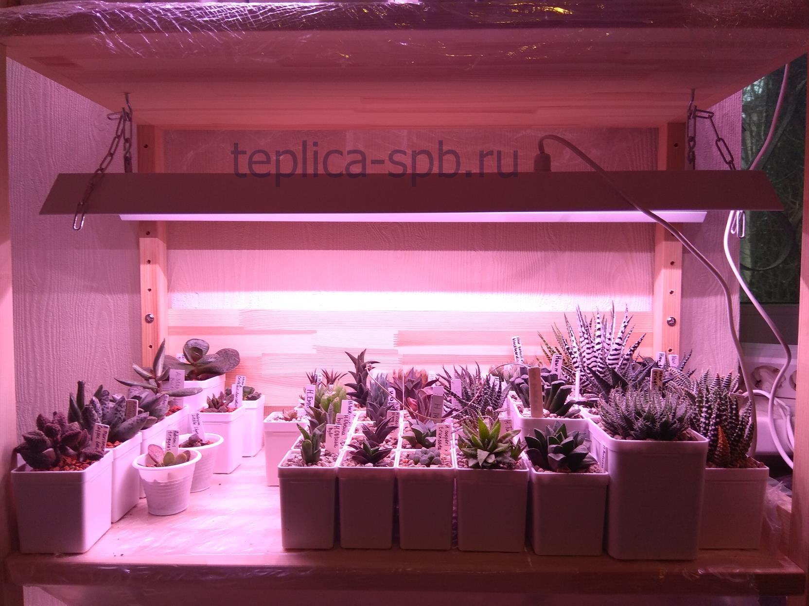 фитостеллаж для растений с подсветкой