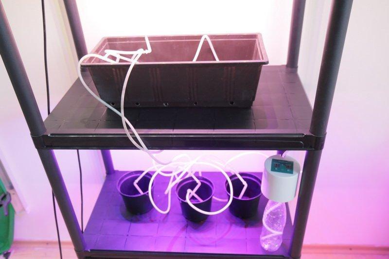 Фитостеллаж с подсветкой для растений