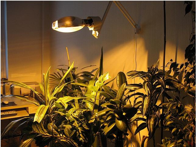 Крепление светильника с лампой Дназ на стене: